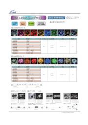 LEDイルミネーション3芯 100球(最大10連結)LEDストリングライトのライトアップで大阪を緑の街に!3芯なら交互点滅可! 表紙画像