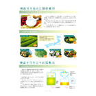 緑茶乾留エキス『フレッシュシライマツ(R)』 表紙画像