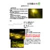 LED防蛾灯20200526.jpg