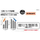 王様いちごの乳酸菌資料 (腸内環境改善・免疫活性) 表紙画像