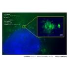 超解像顕微鏡HM-1000取得画像例 Vol.1 Nanoreso「エクソソーム超解像イメージング」 表紙画像