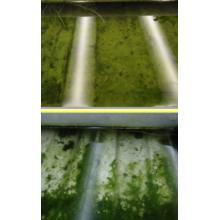 【施設園芸事業】藻が活着しにくい『アグリウィードクリアー』 製品画像