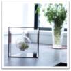 宙に浮いているような不思議なインテリア植物【スペースグリーン】 製品画像