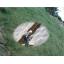 植生基材注入工『グリングリーンマット工法』のご紹介 製品画像