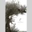『造作用集成材』総合カタログ 製品画像