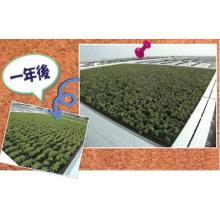 地球にやさしく、お財布にやさしい『屋上緑化』 製品画像