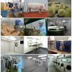 動物用医薬品臨床試験(GCP・GLP) 製品画像