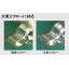 鉛フリーソルダペースト『XFP LF138』 製品画像