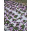 植栽用マルチングシート『シャギーマルチ』 製品画像