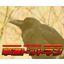 HACCP/GAP対策!害鳥ウイルス対策商品『撃退ドットマン』 製品画像