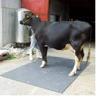 【食品・酪農分野】 プラスチック製敷板『リピーボード』 製品画像