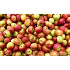 【不定形ワーク認識特化AI事例】農作物・食品のハンドリング 製品画像