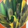 EASI-EXTRACTステリグマトシスチン 製品画像