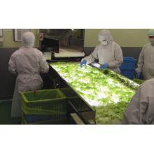 【食品工場や製薬工場の方へ】検品コンベア SUMCON MJ 製品画像