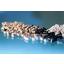 高耐熱性樹脂PEEK 「VESTAKEEP ベスタキープ」 製品画像