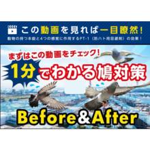 【動画でご紹介】1分でわかる鳩対策|鳥害対策のプロテクト 製品画像