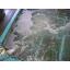 【マイクロバブル導入事例】鮮魚加工工場 活魚水槽 製品画像