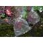 農産物保護用袋『BIKOO』 製品画像