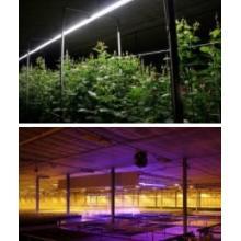 【施設園芸事業】ハウス用LED照明(光環境構築) 製品画像