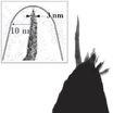 【高分解能タイプ】AFM/SPM用スーパーシャーププローブ 製品画像
