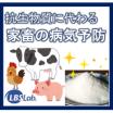 抗生物質に代わる、乗馬の病気予防【LBSカルチャー】 製品画像