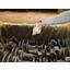 即効型気化性防錆剤『Zerustアクティブパックシリーズ』 製品画像