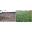 【防草緑化工法事例】石川県内工場敷地内荒地 製品画像