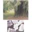 竹から生まれた機能繊維『インドバンブー』 製品画像