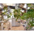 法人向け観葉植物レンタル『レンタルグリーン』 製品画像