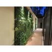 【事例紹介】住宅型老人ホームドライエリアの壁面緑化 製品画像