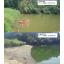 【費用50%縮減!!】サイフォン排水によるため池の水位低下報告 製品画像
