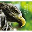 鳥害対策製品『バードストッパー シリーズ』※施工実績多数あり 製品画像