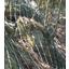 自然保護型落石防止工『ロープネット』 製品画像
