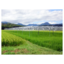 営農型太陽光発電システム『ソーラーシェアリング』 製品画像