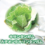 多糖類/増粘剤  カチオン化キサンタンガム『ラボールガムCX』 製品画像