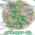 多糖類(増粘剤) カチオン化グアーガム『ラボールガムCG-M』 製品画像