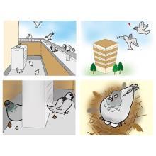 鳩のこと、ご存知ですか? 製品画像