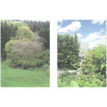 【システムと考え方】緑の質 製品画像