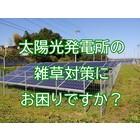 太陽光発電所の草刈り・除草作業を請け負います|PVコンシェルジュ 製品画像