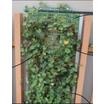 壁面緑化 製品画像