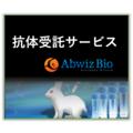 カスタム抗体作製サービス 製品画像
