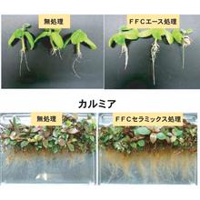植物の生長に及ぼすFFCの作用 製品画像