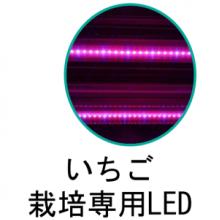 いちご栽培専用LED 製品画像