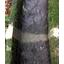 目地補修工法『メジモル/メジモル水中タイプ』 製品画像
