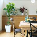 贈答用観葉植物 製品画像