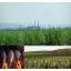 事例:Hardox(R)耐摩耗鋼板製の刃が砂糖工場で活躍 製品画像