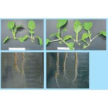 乾害・塩害・霜害抵抗性に及ぼすFFCの作用 製品画像