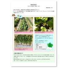 【開発部便り】秋の収穫(カブ・キャベツ・サツマイモ) 製品画像