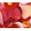 化粧品原料 オリジナル原料『ROSE CRYSTA-CO』 製品画像