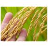 【用途別】農材 製品画像